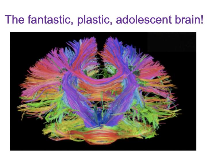 fantastic, plastic adolescent brain